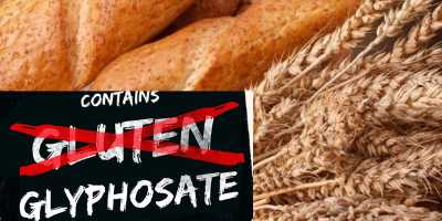 Is Your Food Making You SICK? Gluten Sensitivity and Glyphosate -Part 2 (Podcast Ep 11)